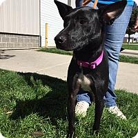 Adopt A Pet :: Blackie - Meridian, ID
