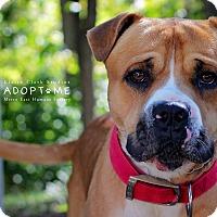 Adopt A Pet :: Gus - Edwardsville, IL