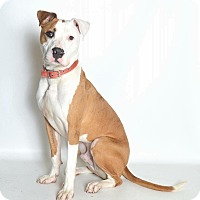 Adopt A Pet :: Cesar - Jefferson City, MO