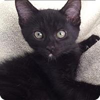 Adopt A Pet :: Marty - Vallejo, CA