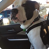 Adopt A Pet :: Beau - Frankfort, IL