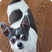 Adopt A Pet :: Joey - Eau Claire, WI - Dayton, OH