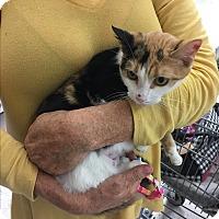 Adopt A Pet :: MABEL - Glendale, AZ