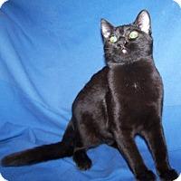 Adopt A Pet :: Alyss - Colorado Springs, CO