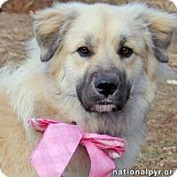 Adopt A Pet :: Camille - pending - Beacon, NY