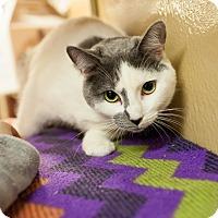 Adopt A Pet :: Victoria - Statesville, NC