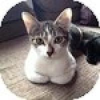 Adopt A Pet :: Franny - Vancouver, BC