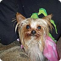 Adopt A Pet :: Biscuit - Lorain, OH