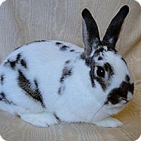 Adopt A Pet :: Marbles - Los Angeles, CA
