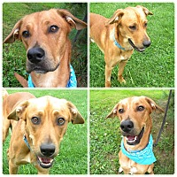 Adopt A Pet :: Rumba - Monteregie, QC