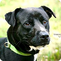 Adopt A Pet :: Coppola - RESCUED! - Zanesville, OH