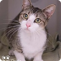 Adopt A Pet :: Claudia - Merrifield, VA