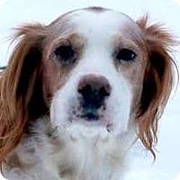 Adopt A Pet :: ELI - Pine Grove, PA