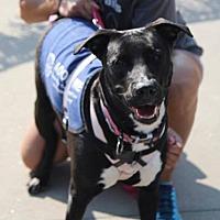 Adopt A Pet :: Leela - Lebanon, CT