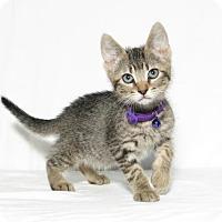 Adopt A Pet :: Flounder - Lufkin, TX