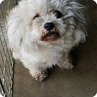 Adopt A Pet :: Scooter-(RC) - Santa Ana, CA