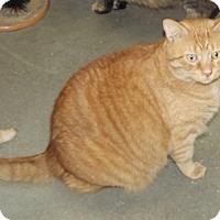 Adopt A Pet :: Runt - Cheboygan, MI