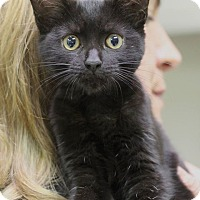 Adopt A Pet :: Spooky - Mount Laurel, NJ