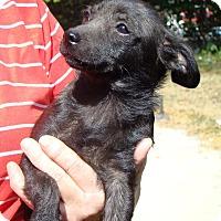 Adopt A Pet :: Beauty - Southbury, CT