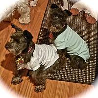 Adopt A Pet :: Belle & Winnie - Sharonville, OH