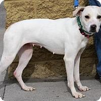 Adopt A Pet :: Farrah - Gilbert, AZ