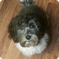 Adopt A Pet :: Tedyy - Modesto, CA