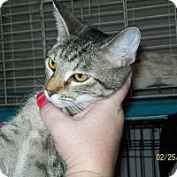 Adopt A Pet :: Smokee - Mexia, TX