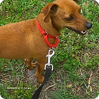 Adopt A Pet :: Milo - Orange Park, FL
