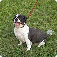 Adopt A Pet :: Tashi - Brattleboro, VT