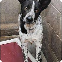 Adopt A Pet :: Jack (adoption pending) - Phoenix, AZ