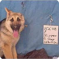 Adopt A Pet :: Slipper/Pending - Zanesville, OH