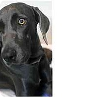 Adopt A Pet :: Juno  **ADOPTED** - Eustis, FL