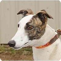 Adopt A Pet :: Wacky - Chagrin Falls, OH