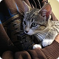 Adopt A Pet :: Tabbytha - Island Park, NY