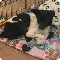 Adopt A Pet :: Mitchell - Phoenix, AZ