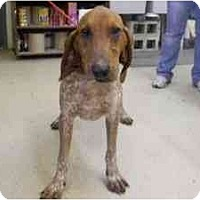 Adopt A Pet :: Oscar - Alexandria, VA