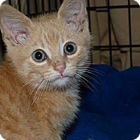 Adopt A Pet :: Sunny - Stafford, VA
