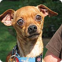 Adopt A Pet :: B.J. - Salem, OR
