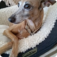 Adopt A Pet :: Isaac - OC - San Diego, CA