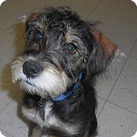 Adopt A Pet :: Jak - Lockhart, TX