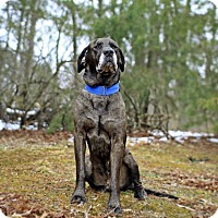 Adopt A Pet :: Gandalf - Virginia Beach, VA