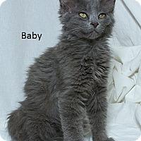 Adopt A Pet :: Baby B - Sacramento, CA