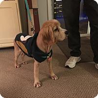 Adopt A Pet :: Sawyer 5yr Adopted - Mentor, OH
