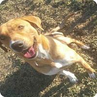 Adopt A Pet :: PRETTY LEGS - Houston, TX
