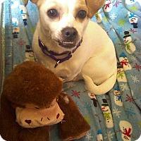Adopt A Pet :: Ivy - West Allis, WI