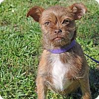 Adopt A Pet :: Sky Rocket - Barnesville, GA