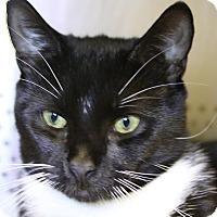 Adopt A Pet :: Apache - Sarasota, FL
