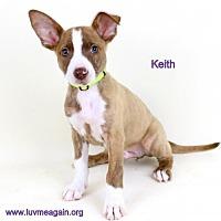 Adopt A Pet :: Keith - Bloomington, MN