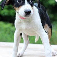 Adopt A Pet :: Fern - Waldorf, MD