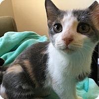 Adopt A Pet :: Edie - Colmar, PA